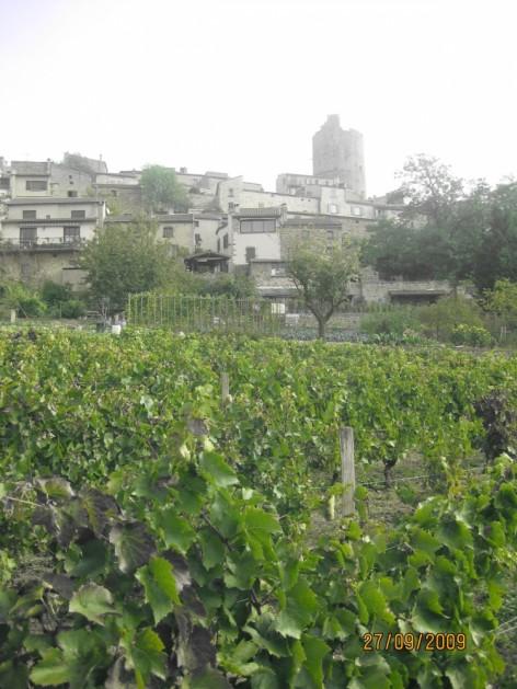 les vignes - de BERNARD Yvan